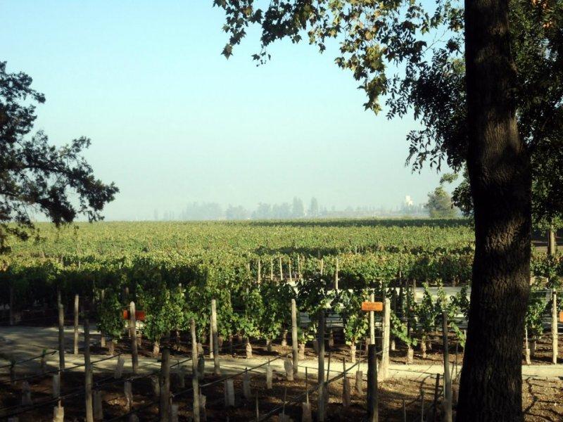 Santiago: Comprando vinhos chilenos